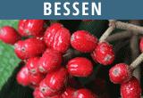 Bessen