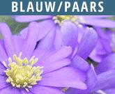 Blauw-Paars