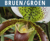 Bruen-Groen