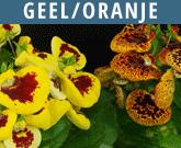 Geel-Oranje