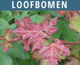 Loofbomen