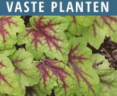 Vaste-Planten