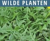 Wilde-planten