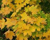 Bladeren herkennen