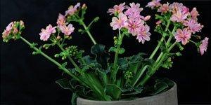 Alle bloemen