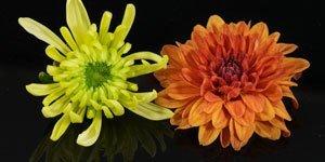 geel oranje